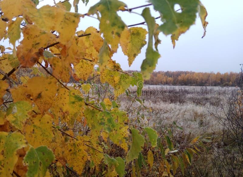 De herfst Bos landschap grijze hemel en bomen met gele bladeren en geen bladeren horizon natuurlijke achtergrond van Rusland royalty-vrije stock fotografie