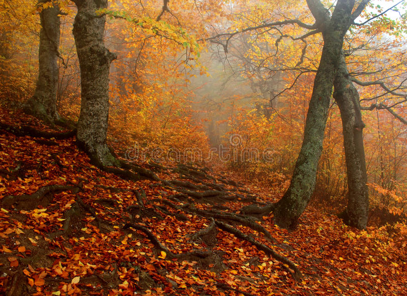 De herfst bosbrand royalty-vrije stock foto's