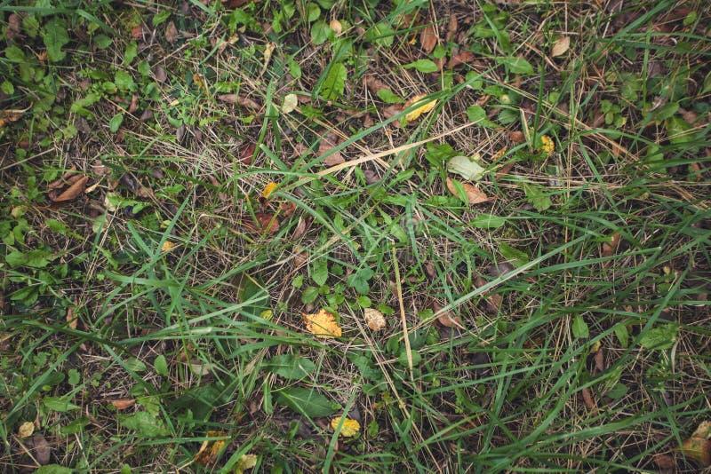 De herfst bosgras met bladeren, hoogste mening Ruimte voor tekst Achtergrond royalty-vrije stock afbeelding