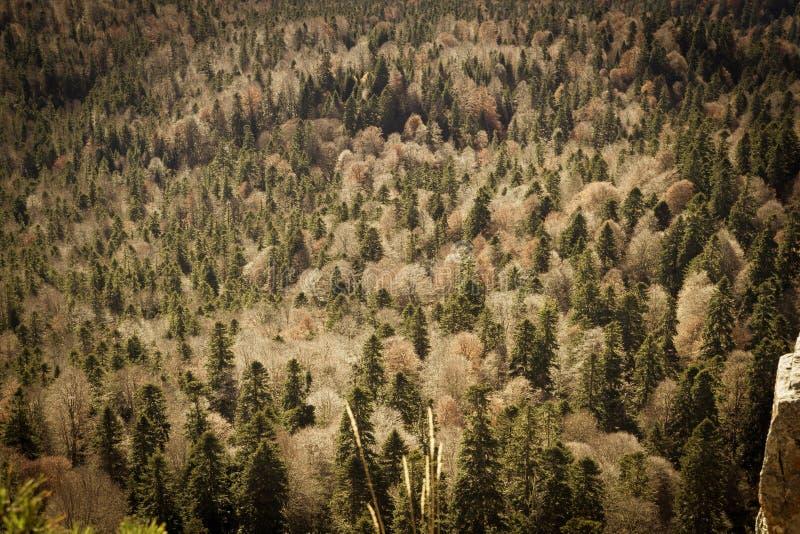 De herfst boslandschap, geweven achtergrond stock foto