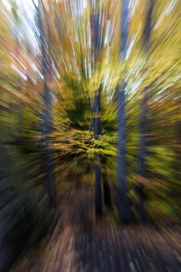 De herfst bossamenvatting royalty-vrije stock fotografie