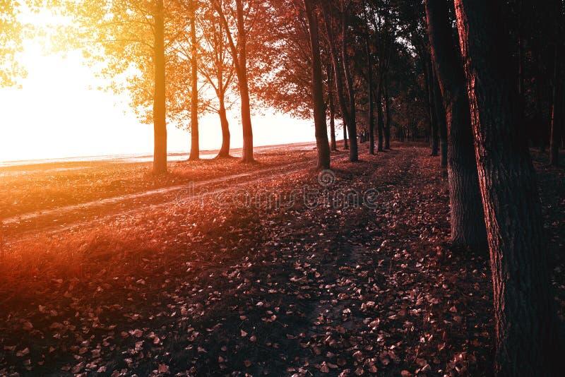 De herfst bosweg op ochtend stock foto