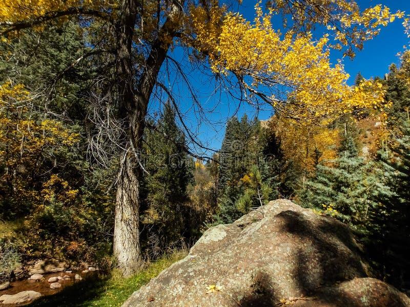 De herfst in de canion stock fotografie