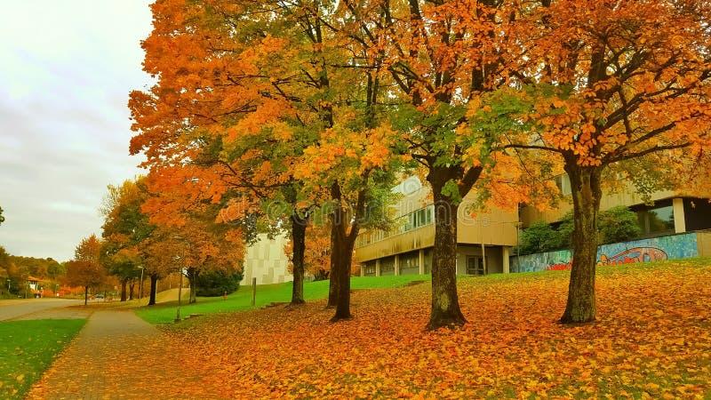 De herfst in clausthal-Zellerfeld royalty-vrije stock fotografie