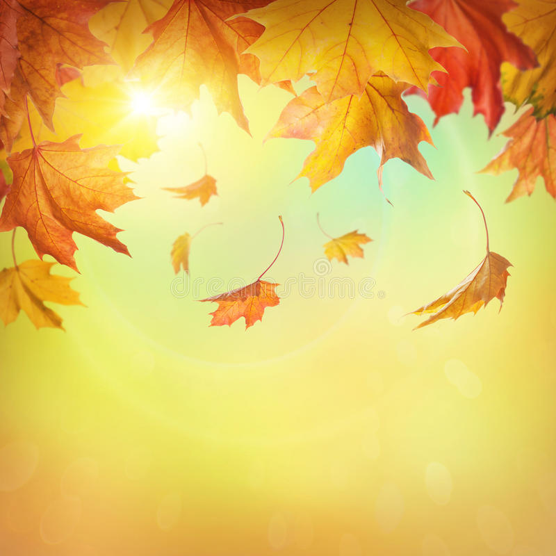 De herfst dalende bladeren stock afbeelding