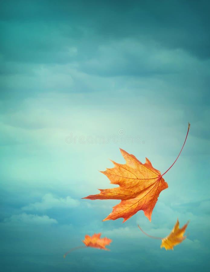 De herfst dalende bladeren royalty-vrije stock fotografie