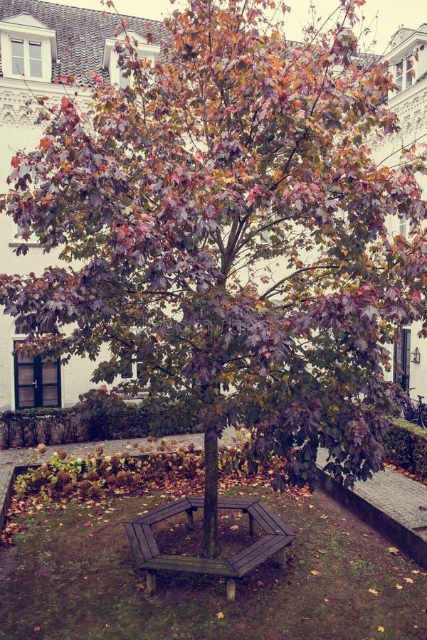 De herfst Daling Herfst park Autumn Trees en Bladeren binnen, Eenzame kleurrijke boom royalty-vrije stock fotografie
