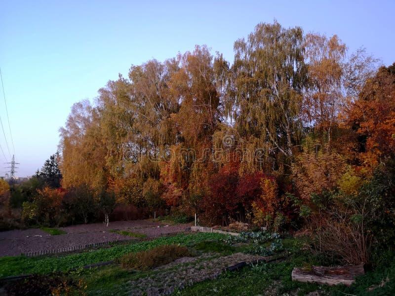 De herfst Daling Herfst park De bomen en de bladeren van de herfst royalty-vrije stock foto