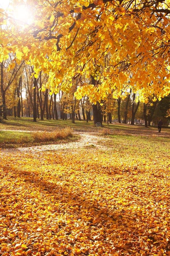De herfst, dalingsachtergrond stock fotografie