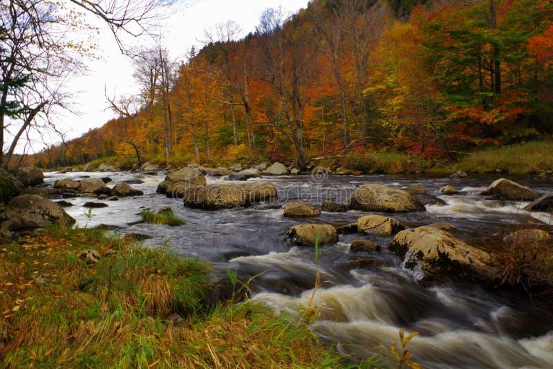 De herfst/Dalingsgebladerte in het Adirondack-Gebied van Bergen Hoge Pieken royalty-vrije stock fotografie