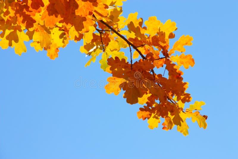 De herfst/Dalingshemelachtergrond - Gouden bladeren royalty-vrije stock afbeelding