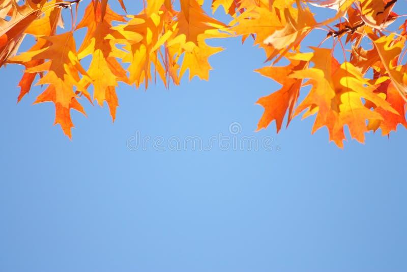 De herfst/Dalingshemelachtergrond - Gouden bladeren royalty-vrije stock foto