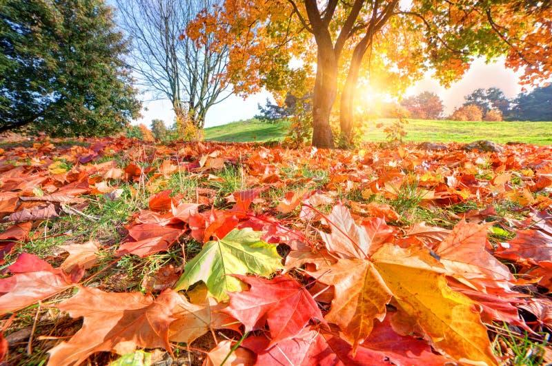 De herfst, dalingslandschap in park royalty-vrije stock afbeeldingen