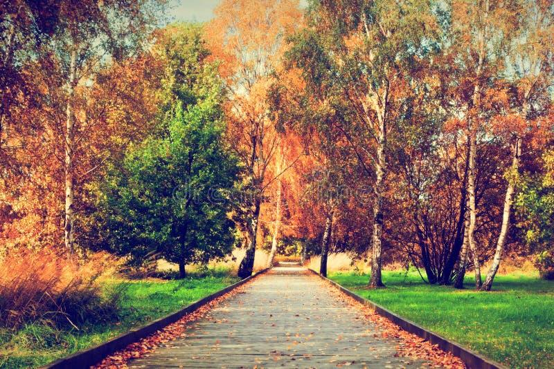 De herfst, dalingspark Houten weg, kleurrijke bladeren op bomen royalty-vrije stock afbeeldingen