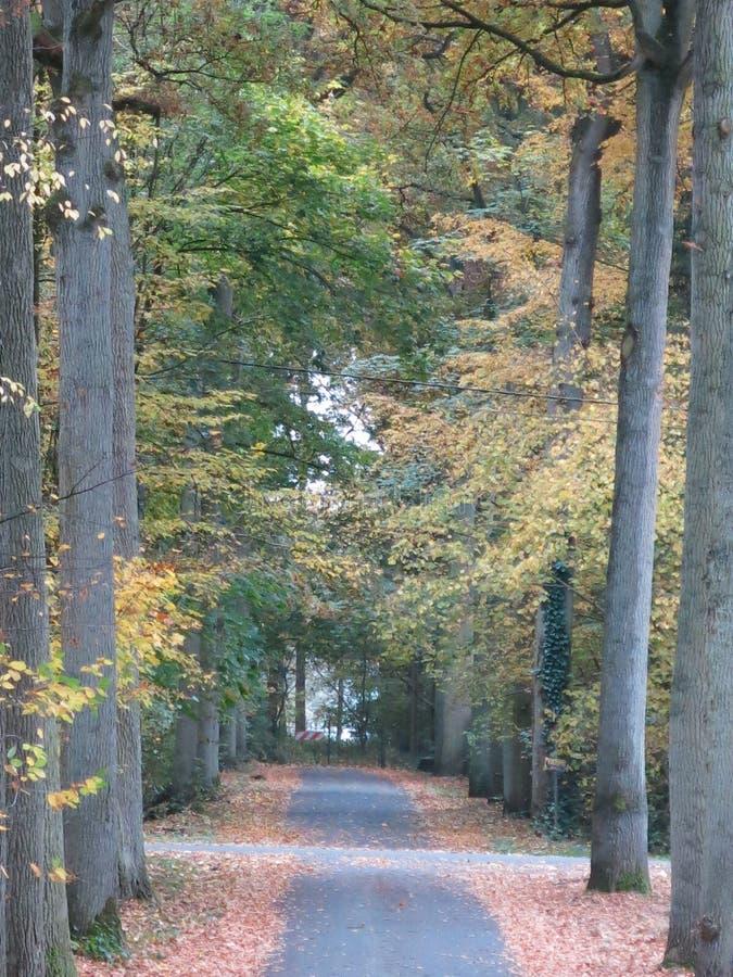 De herfst in de Bos en Open Weg stock fotografie