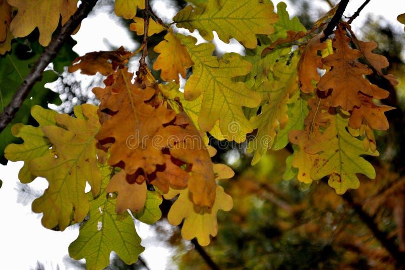 De herfst, de herfstkleuren, de herfstbladeren royalty-vrije stock afbeeldingen