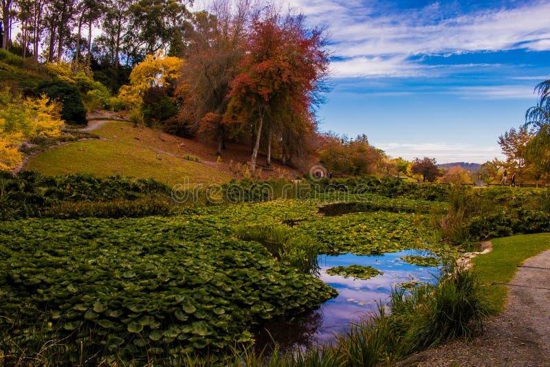 De herfst in de Onderstel Torenhoge Botanische Tuinen stock foto
