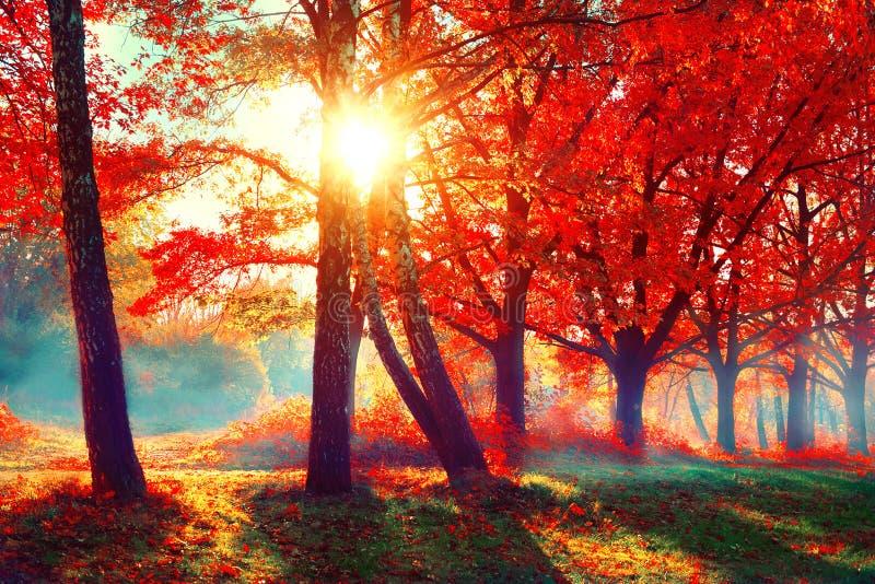 De herfst De scène van de dalingsaard Herfst park stock foto's