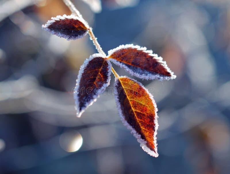 De herfst of de winter? royalty-vrije stock foto's