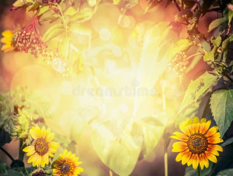 De herfst of de zomer vertroebelde aardachtergrond met zonnebloemen, bladeren, ouder en gebladerte met zonlicht royalty-vrije stock fotografie