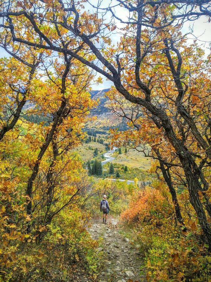 De herfst die in de wildernis van Colorado wandelen stock afbeelding