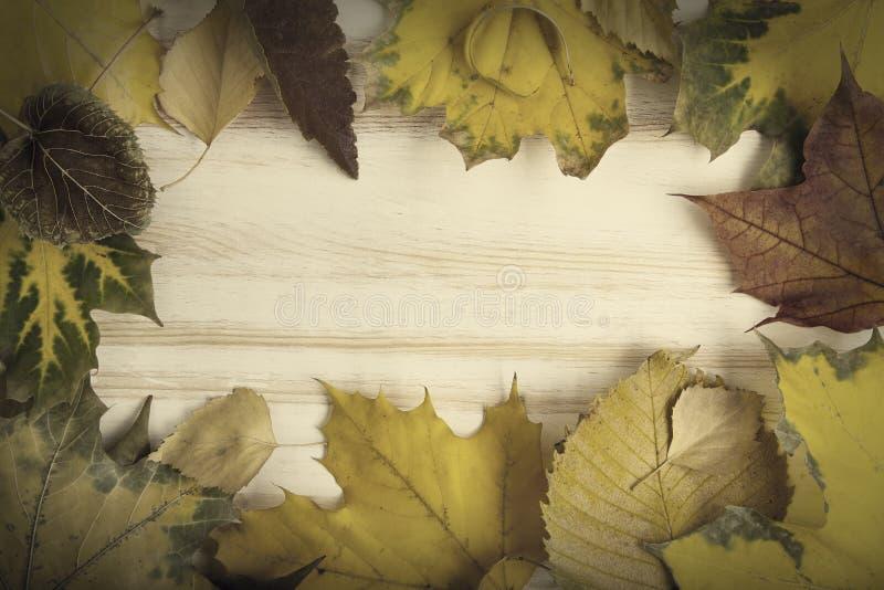 De herfst die op de boom met bladkader wordt geclassificeerd voor woorden en insc stock foto