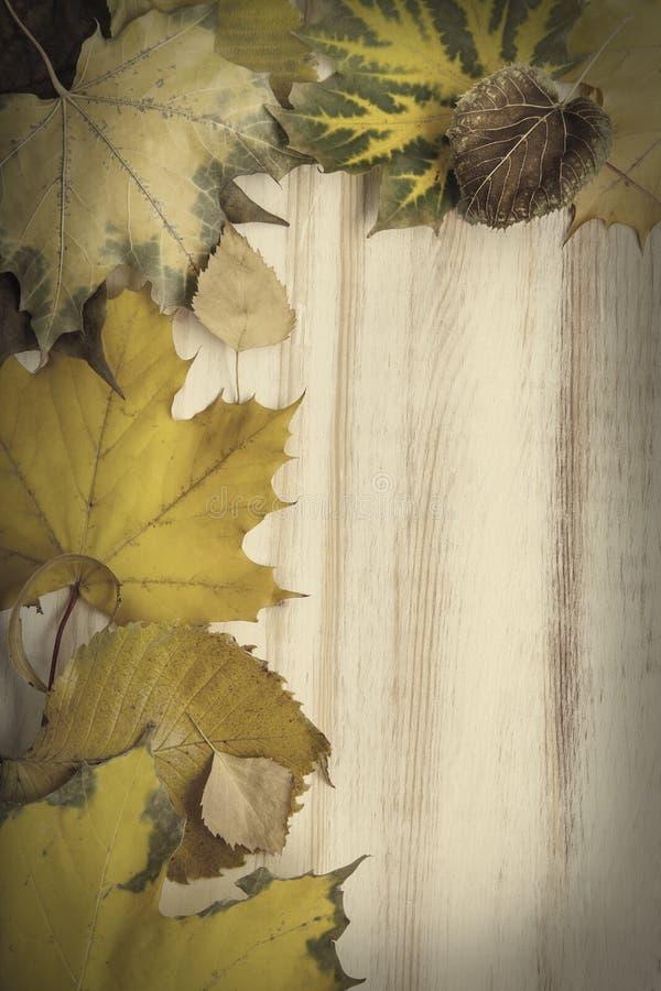De herfst die op de boom met bladkader wordt geclassificeerd voor woorden en insc stock afbeelding
