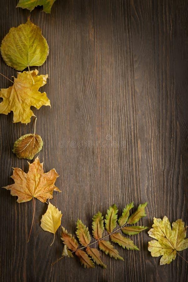 De herfst die op de boom met bladkader wordt geclassificeerd voor woorden en insc stock foto's