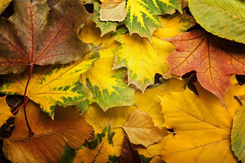 De herfst die op de boom met bladkader wordt geclassificeerd voor woorden en insc royalty-vrije stock foto's