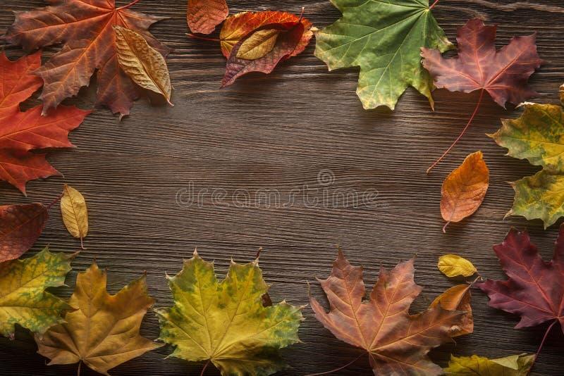 De herfst die op de boom met bladkader wordt geclassificeerd voor woorden en insc stock fotografie