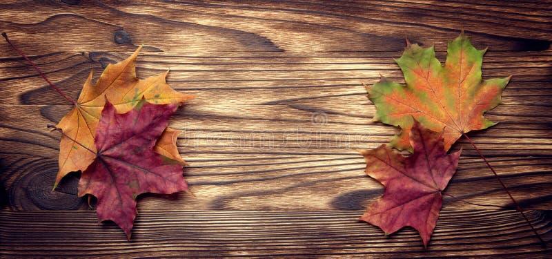 De herfst die op de boom met bladkader wordt geclassificeerd voor woorden en insc royalty-vrije stock fotografie