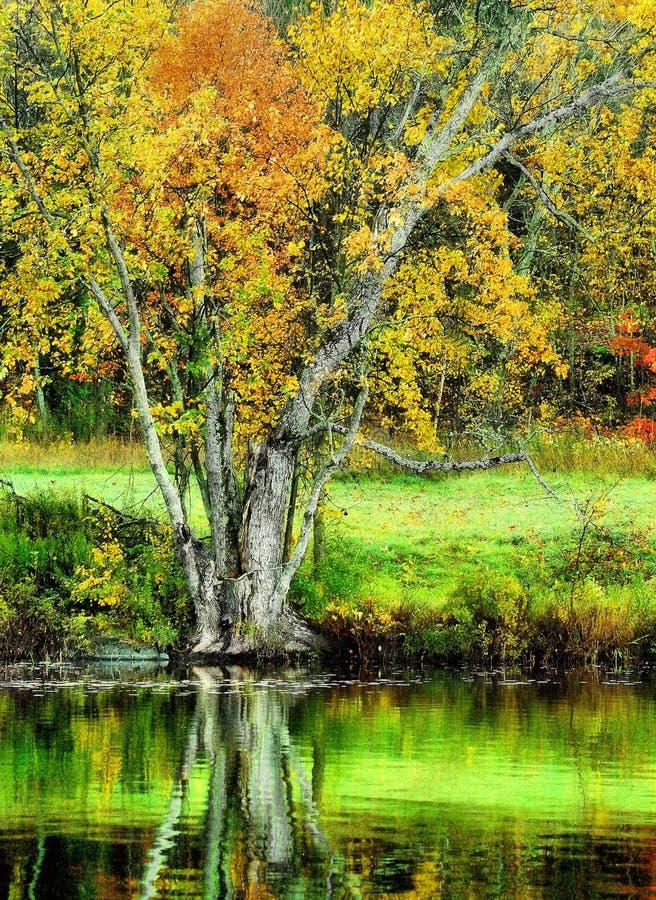 De herfst door het meer stock foto's