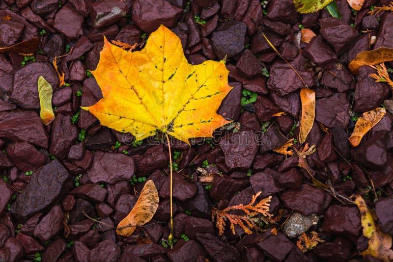De herfst doorbladert achtergrond royalty-vrije stock foto's