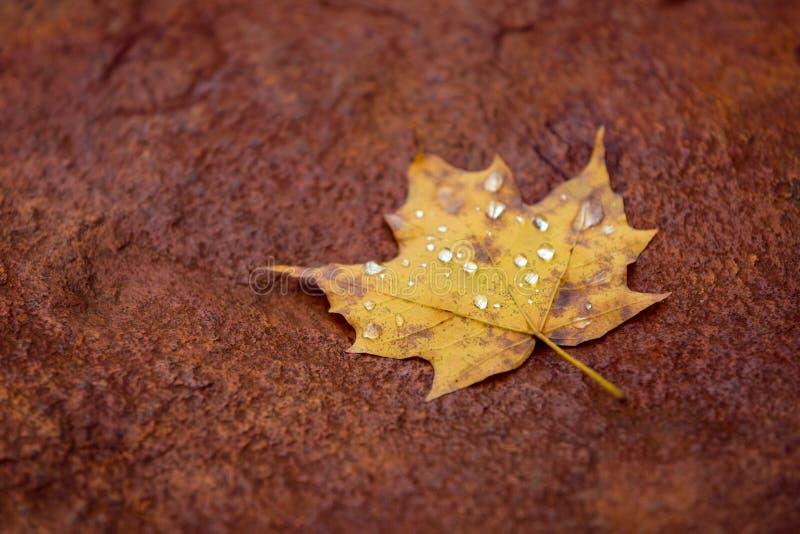 De herfst doorbladert samenvatting royalty-vrije stock foto