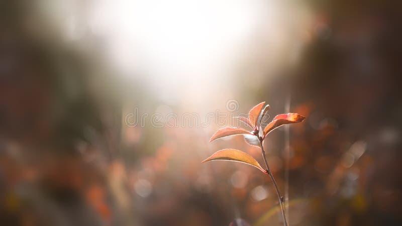 De herfst droge grassen in een bos bij zonsondergang stock afbeeldingen