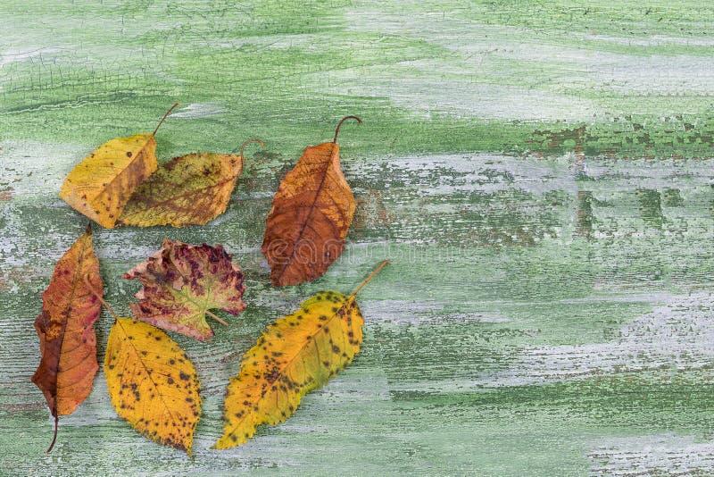De herfst droge veelkleurige bladeren hoop van dood blad op groene houten achtergrond met exemplaarruimte royalty-vrije stock foto