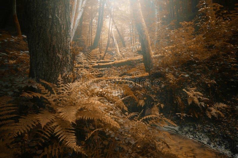 De herfst in een weelderig bos stock afbeelding