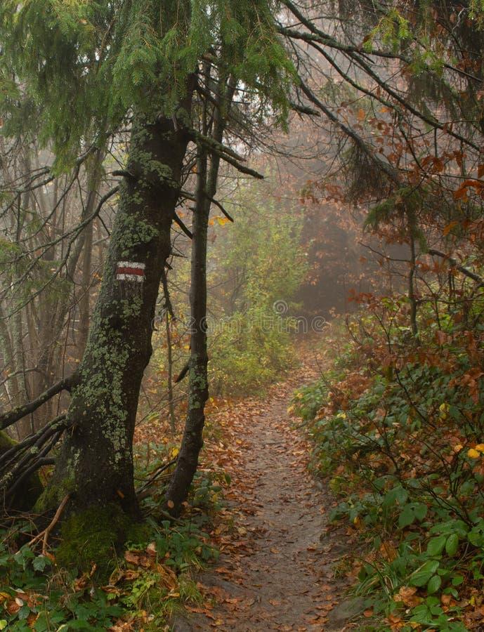 De herfst in een wilde wazige bosweg aan nergens Bieszczady Nationaal Park stock afbeeldingen