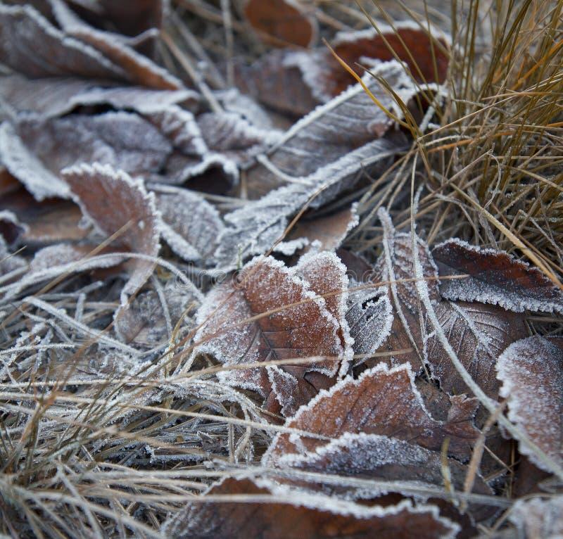 De herfst frosen gevallen bladeren stock foto's