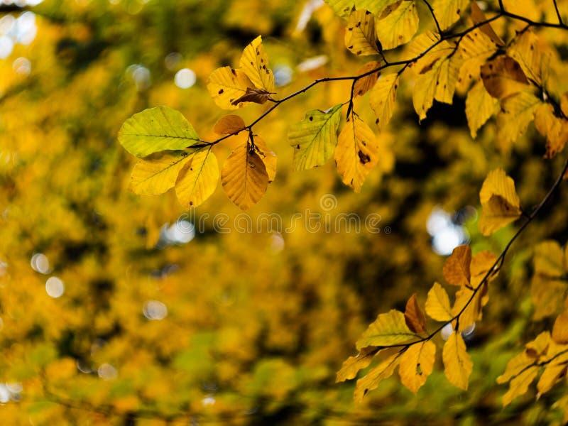De herfst gaat bokeh weg stock afbeelding