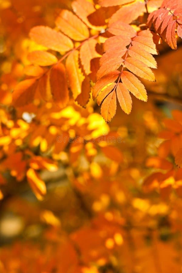 De herfst geel gebladerte van de close-up stock foto's