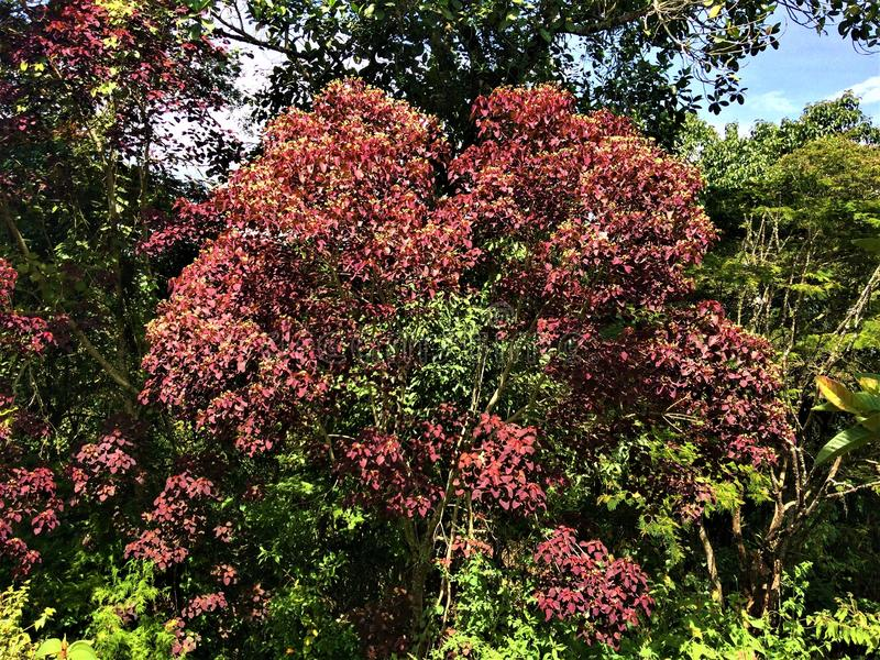 De herfst gekleurde bomen in natuurlijk royalty-vrije stock afbeeldingen