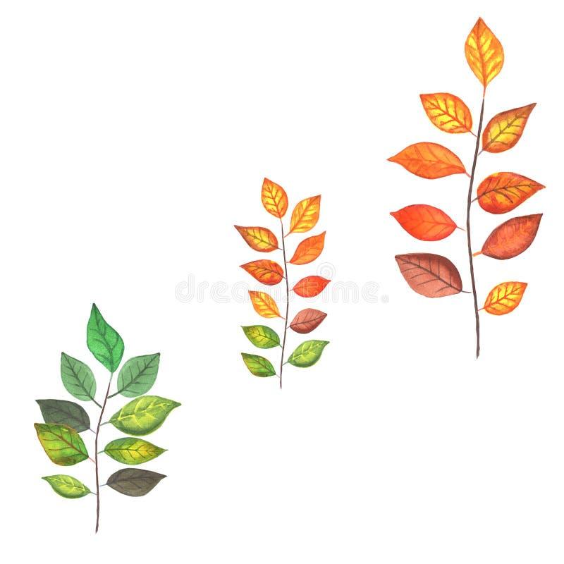 De herfst gekleurde takken vector illustratie