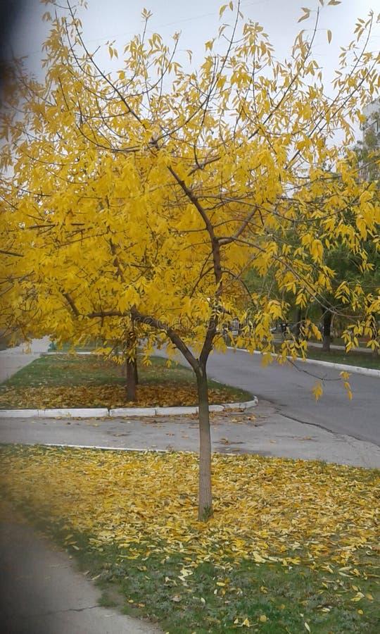 De herfst is gekomen stock foto's