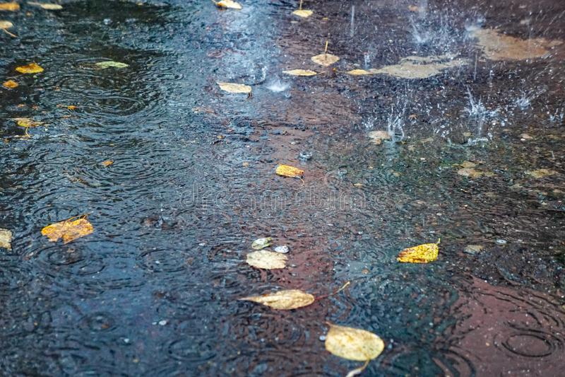 De herfst gele bladeren in het water, in een vulklei, een regen, plonsen en cirkels op het water royalty-vrije stock fotografie
