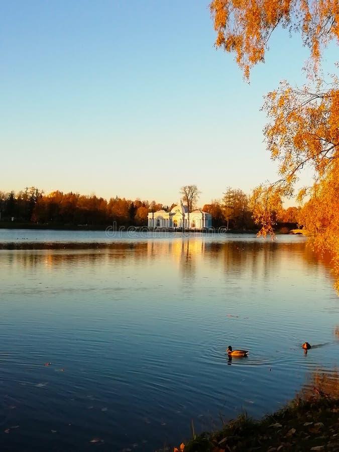 De herfst gele bladeren van bomen Twee eenden zwemmen in de vijver Blauw hemel en water royalty-vrije stock foto's