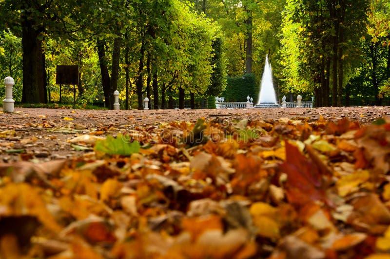 De herfst gele en oranje bladeren op de steeg en de Piramidefontein in het Lagere Park van Peterhof, Heilige Petersburg, Rusland royalty-vrije stock afbeeldingen