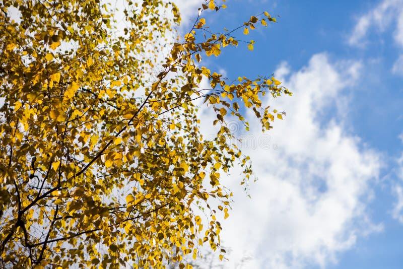 de herfst gele en rode bladeren tegen de blauwe hemel royalty-vrije stock foto