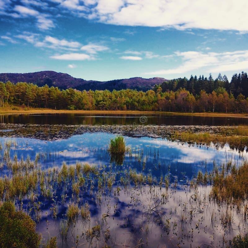 de herfst in gele kleur stock afbeelding