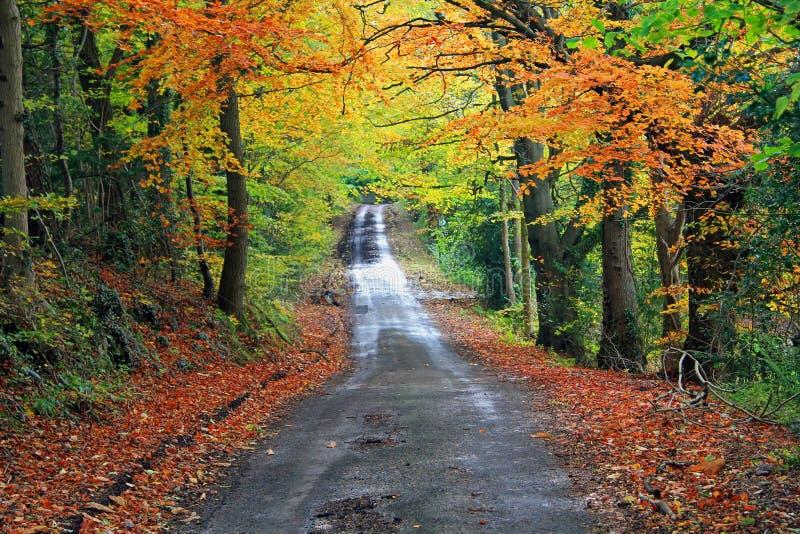 De herfst in Gemeenschappelijk, Rhydymwyn stock afbeelding